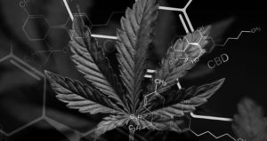 THE BENEFITS OF CBD WITHOUT THC